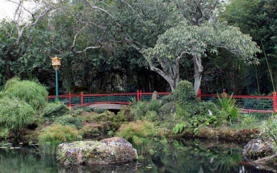лес, качественные, фотографий