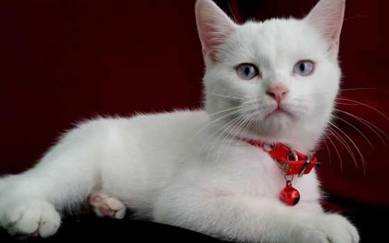 кота, gps, mobile, hvga, biały, animal, cats, kot, tapety,
