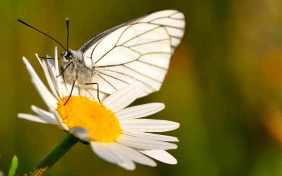 ecran, fonds, hebus, fleurs, кот, téléchargement, gratuit, изображение, природа, par, galerie,