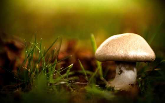 гриб, роса, трова