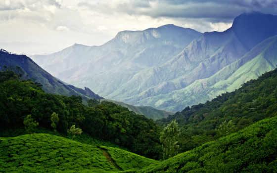 зелёный, плантации, чая