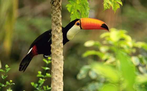 zhivotnye, природа, животных, фотографий, удивительные, птицы, живая, fact, планете, одиноки,