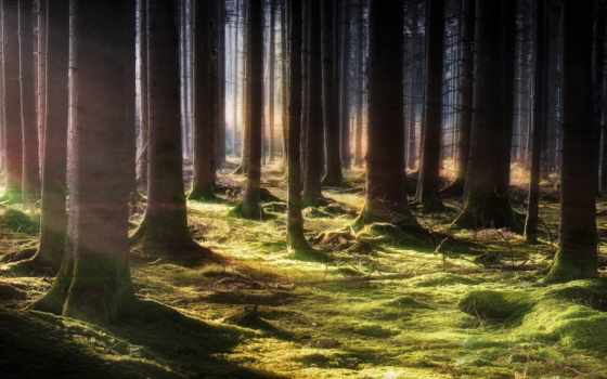 музыка, bosque, hielo, top, hermoso, relaxing, лес, природа,