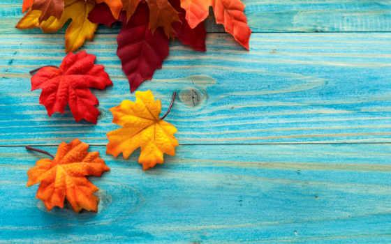 листва, осень, maple, осенние, украсят, подборка, ежедневная, click, доски,