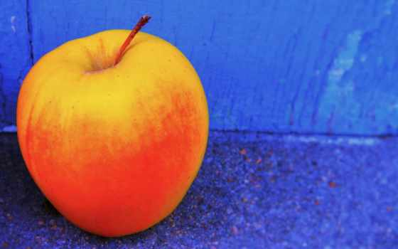 плод, are,