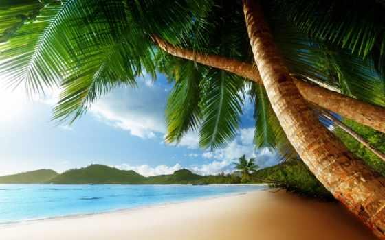 пальмы, фотообои, берегу, palm, море, пляж, моря, берег, вычислить,