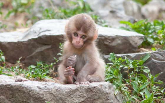 обезьяны, video, детей, развивающее, ежик, год, share, огненной, чему, обезьяна,