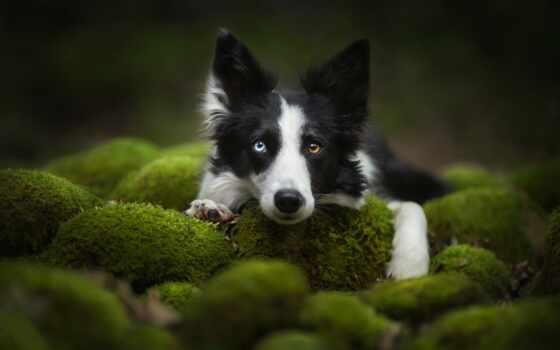 animal, уж, loaded, best, собака, они, птица, когда