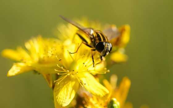 summer, мед, пчелка, качество, adsbygoogle, adsense, ipad, цветы, опыление