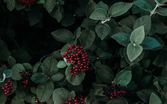 color, палитра, christmas, идея, зелёный, схема, colour, new, inspiration