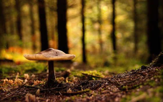 mushroom, лес, widescreen