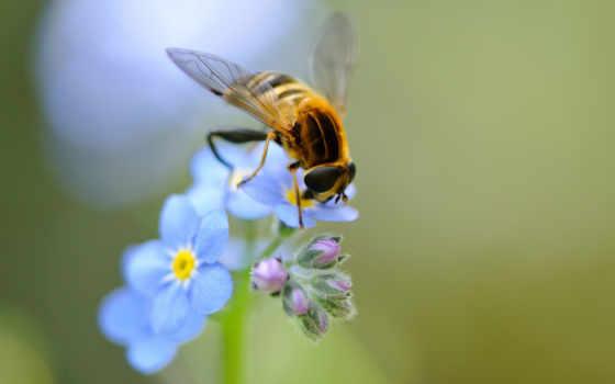 пчелка, цветы, макро