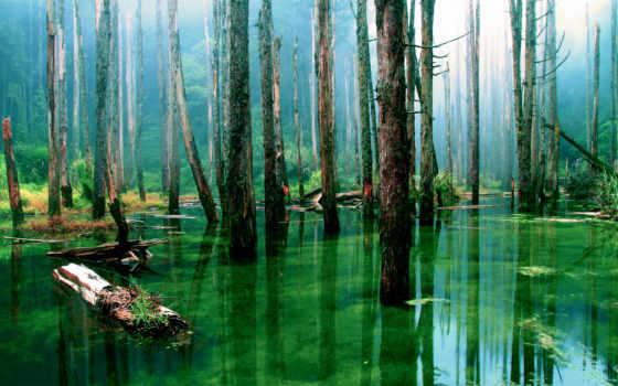 лес, деревя, коллекция