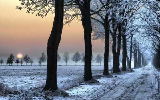 winter, дорога, снег, traces, деревь, trees, лес, зимой,