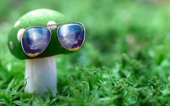 гриб с очками