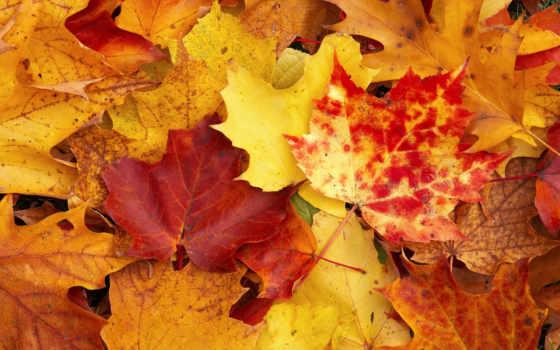 осень, желтый