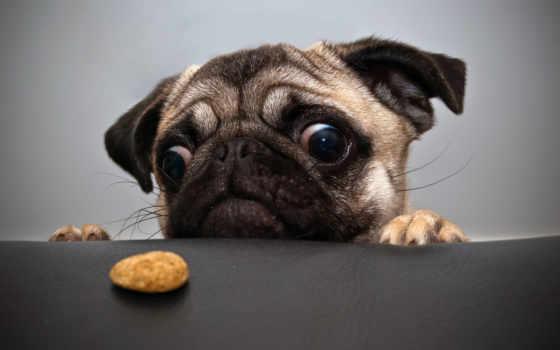 печенье, анекдоты, video
