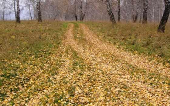 дорога, осень, листьев, настроения, природа, дек,