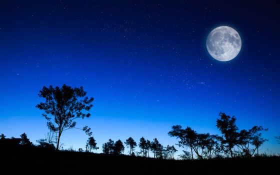 ночь, звезды, небо, луна, trees, силуэты, лес, свет,
