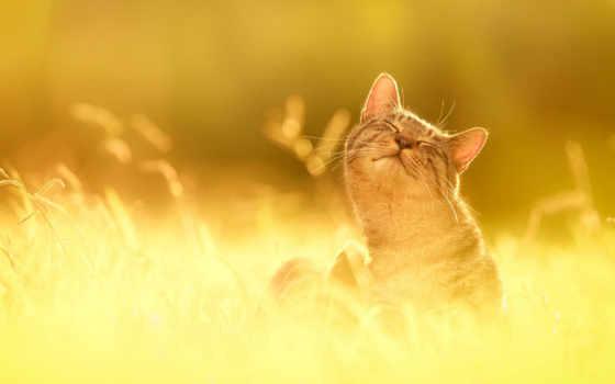 будет, you, everything, sun, если, за, бе, захочешь,
