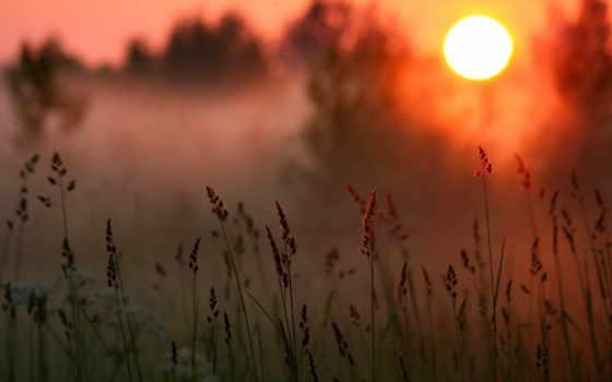 закат, sun, лес, трава, лесу, туман, солнца,