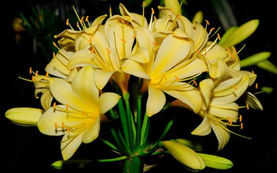 las, hoa