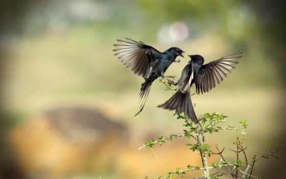 birds, full, животные