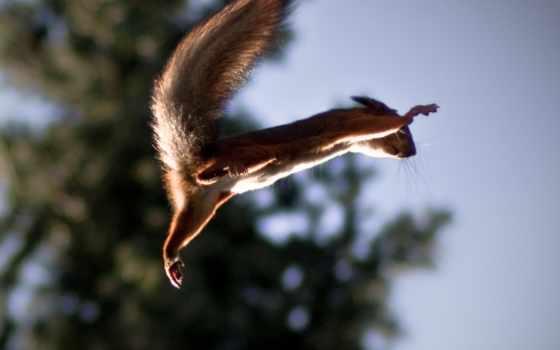 белки, летающая