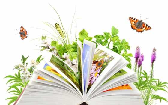 libro, naturaleza, archivo, imagen, fotos, fotografía, stock, imágenes, regalías,