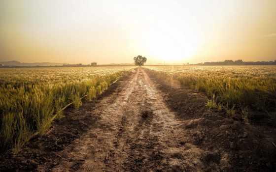 дорога, грунтовая, поле, among, margin, поспевающей, фермерского, пшеницы,