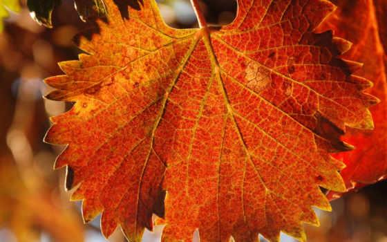 природа, осень Фон № 19541 разрешение 1680x1050