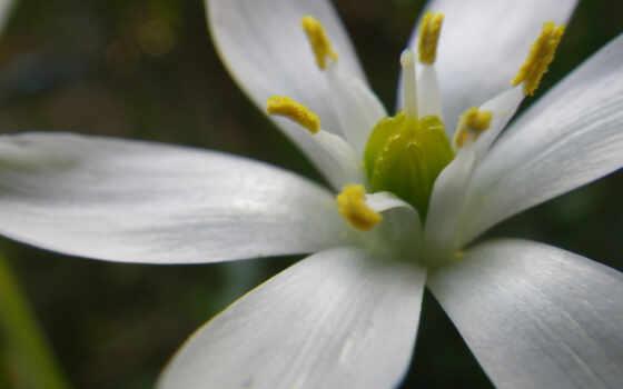 Цветы 37401