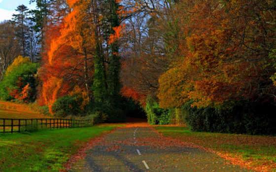 осень, дорога, листья