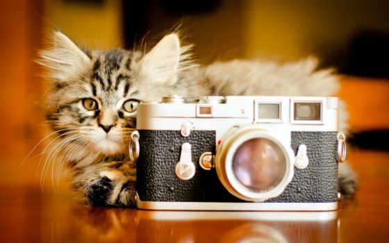 кошки, кот, котенок Фон № 113190 разрешение 1920x1200