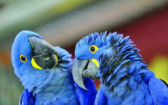 попугаи, клюв,