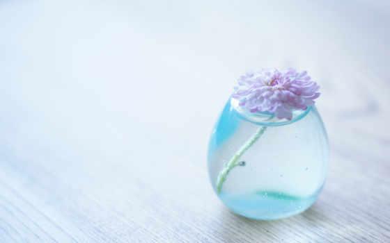 cvety, mobile, телефон, flowers, цветы, ваза, нежность,