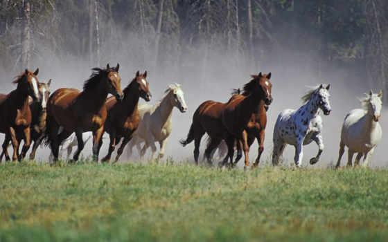 horses, лошадь, wild, are, run