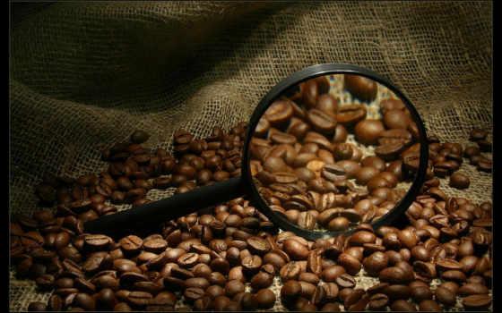 кофе, зернах, арабика