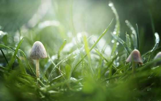 изображение, трава, роса