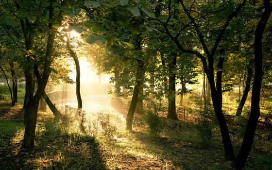 природа, красивые, pack