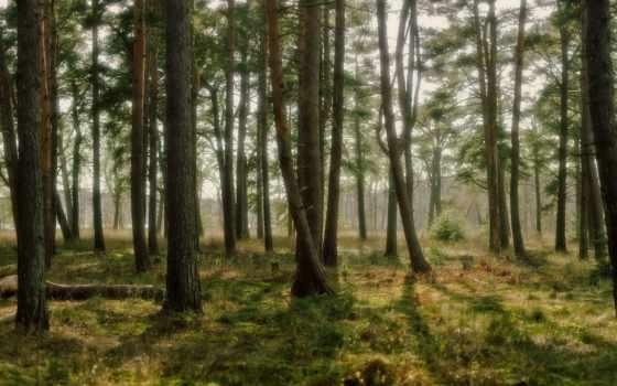 лес, сайт, desktop