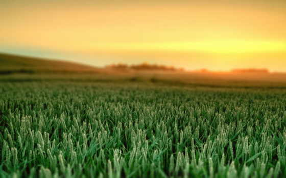 пейзажи -, поле, рассвет