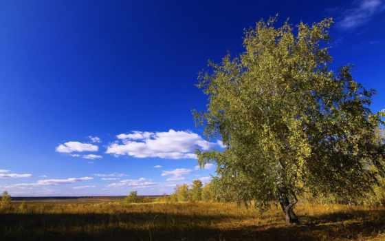 cvety, поле, дерево, poppies, маки, небо,