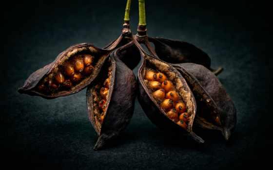макро, life, photography, еще, благо, семена, fruits, seeds,