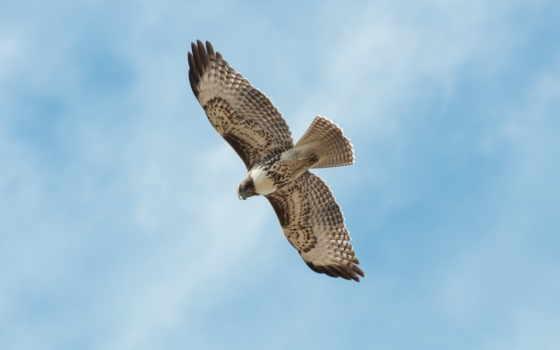 volando, pajaro, azul, небо, птица, pictures, pájaro, cielo, stock,