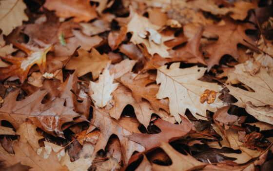 lucas, большой, блог, mulch, leaf, copy, print, дерево, hombre