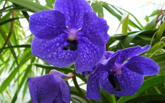 цветы, другие, красавица