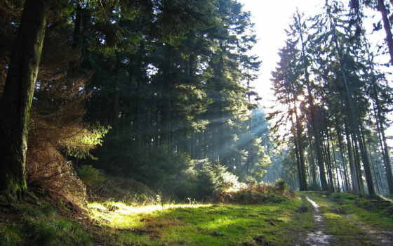дорога, лес, после, дождя, освещаемая, лучи, лесу, perfume, лучами, разных, мл,