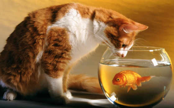 кот, zooatlas, fish, атлас, аквариум, аквариуме, аквариума,