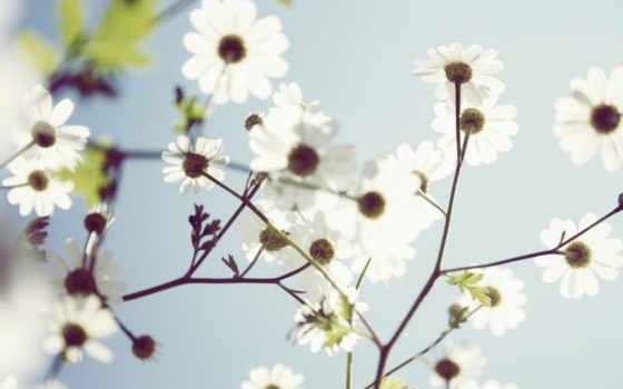 cvety, белые, весенние, природа,